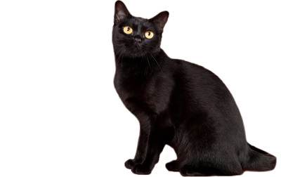 file_2756_Bombay-cat-breed